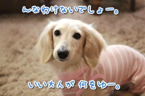 20150326094645.jpg