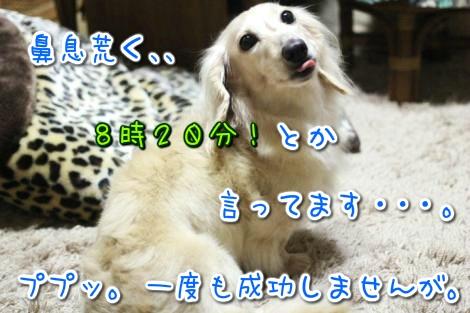 20150411013112.jpg
