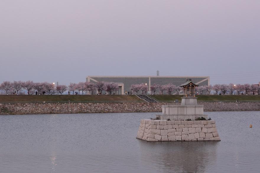 狭山池・桜 (14)