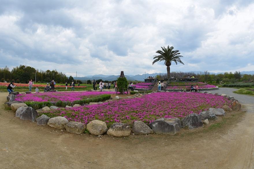 春の和泉環境 (1)