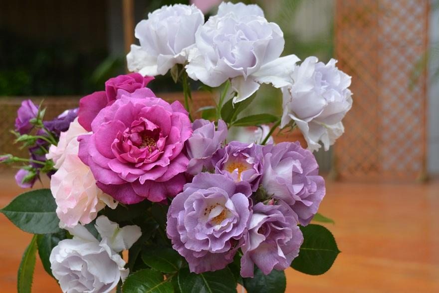 咲くやこの花のバラ (1)
