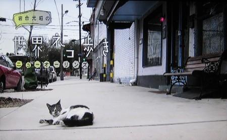 岩合光昭の世界ネコ歩き「ニューオリンズ」