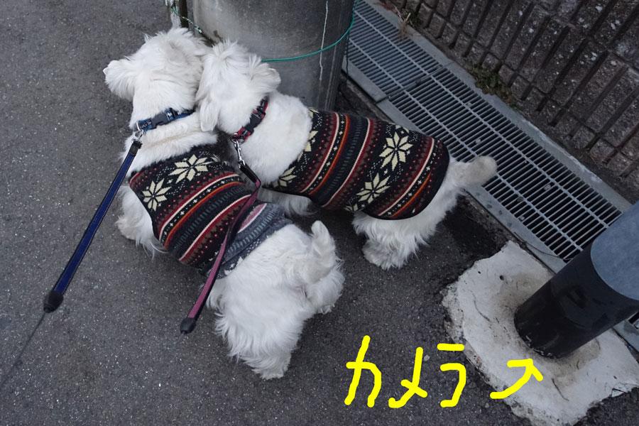asahamechasamukuyuuatui5.jpg