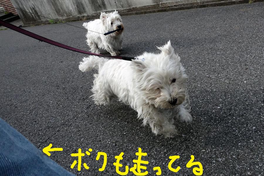 bosaobosakomosukinandakedo3.jpg
