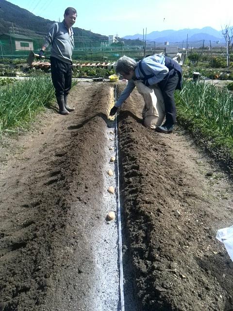 馬鈴薯植え付け