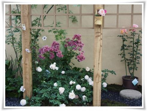 ⑥国際薔薇ガーデンニグショーP5161298