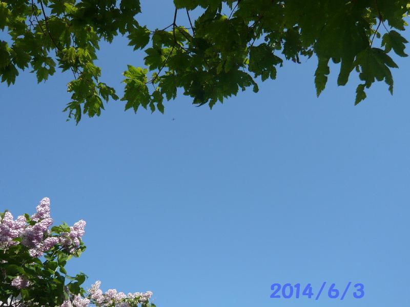 空6月3日