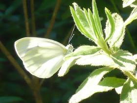 蝶々0828