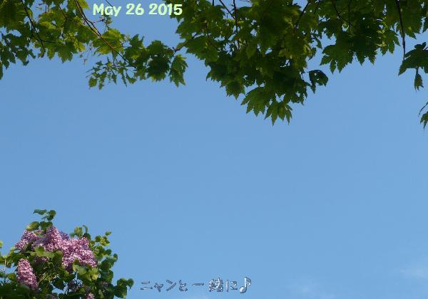 aozora052615.jpg
