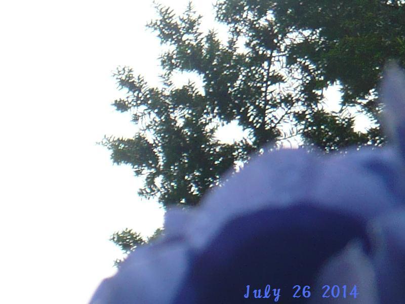 july262014.jpg
