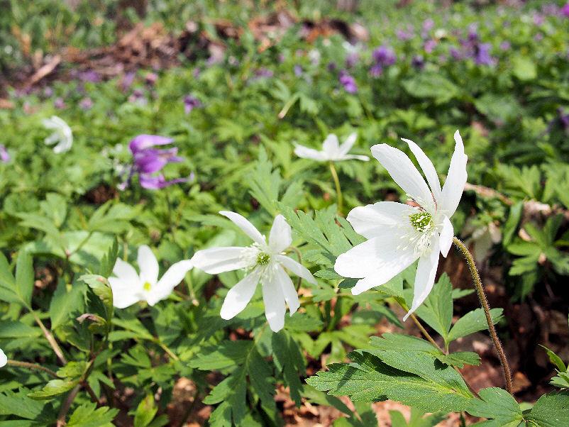 img2015-04-30-Otokoyama012.jpg