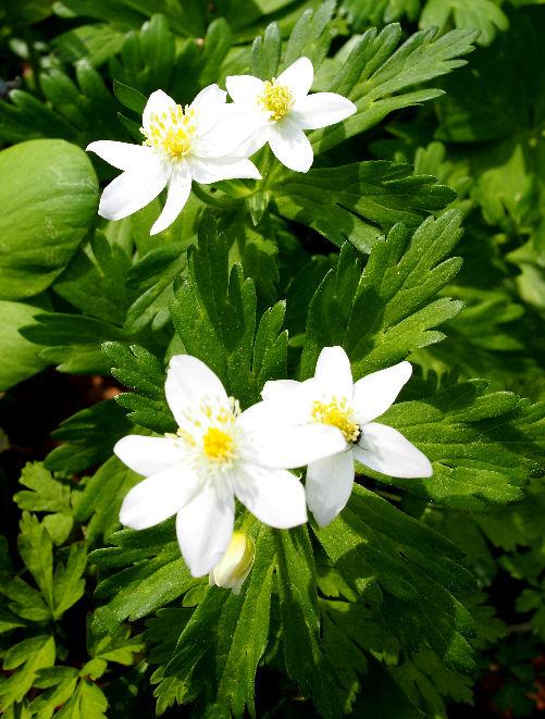 img2015-04-30-Otokoyama05.jpg