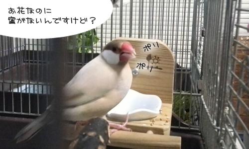 新居にドキドキ同居- 4