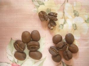 ダテーラ フル ブルーム(珈琲問屋) 欠点豆・大きさのバラつき