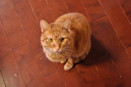 ネココントと長男パズルトレーナー