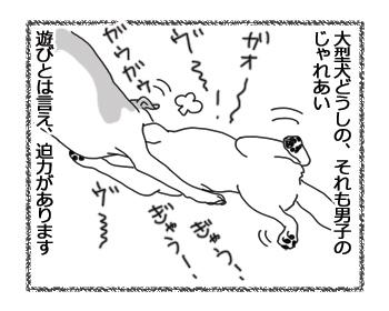 羊の国のラブラドール絵日記シニア!!「ガウガウ・バトル」1