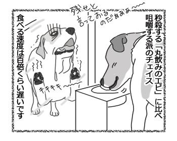 羊の国のラブラドール絵日記シニア!!「我慢だエビちゃん」2