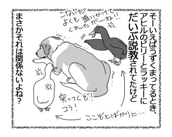 羊の国のラブラドール絵日記シニア!!「アヒルたちの呪い?」4