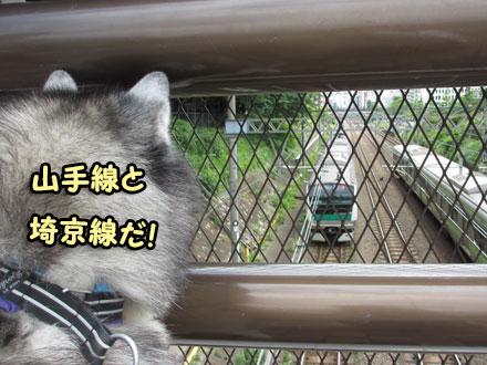 電車の観察
