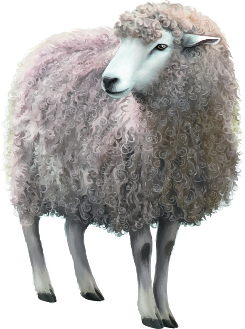 Realistic-sheep-vector-material.jpg