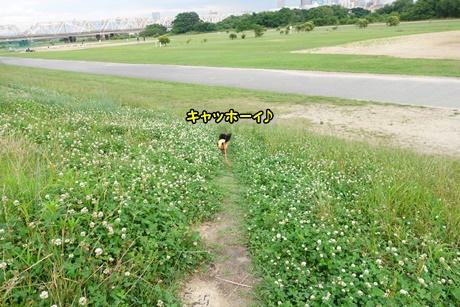 DSC06217.jpg