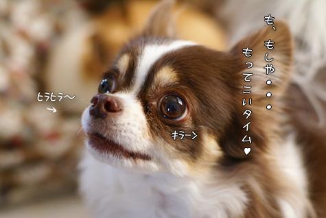 DSC012940210.jpg