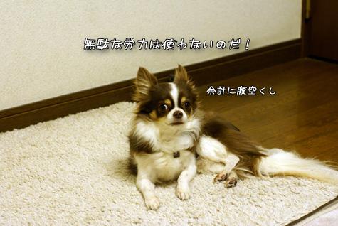 DSC013820219.jpg