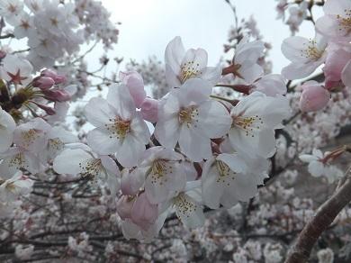 咲いたばかり