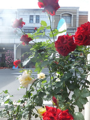 バラの街5