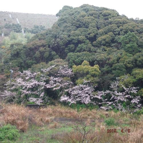 harumaturi-2015-4.jpg