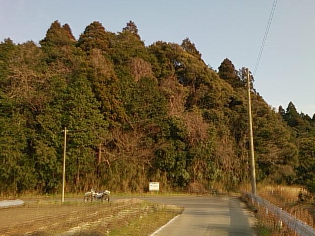 MS-1.jpg