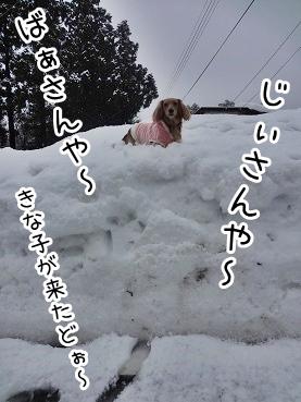 kinako1590.jpg