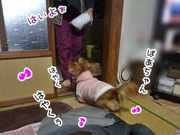 kinako1592.jpg