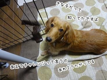 kinako1632.jpg