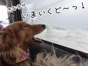 kinako1676.jpg