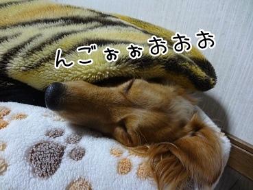 kinako1687.jpg