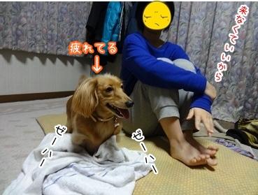 kinako1732.jpg