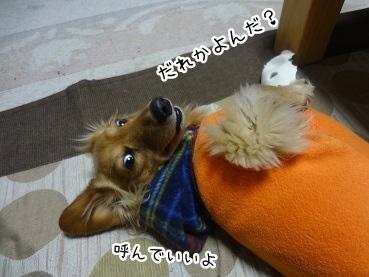 kinako1778.jpg