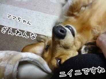 kinako1791.jpg