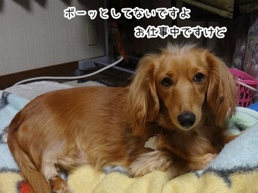 kinako1820.jpg
