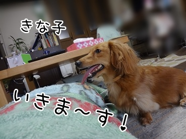 kinako1847.jpg