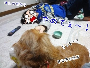 kinako1902.jpg