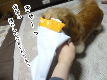 kinako2201.jpg