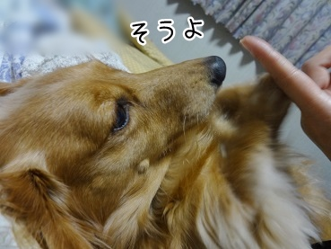 kinako2285.jpg
