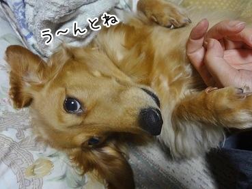 kinako2286.jpg
