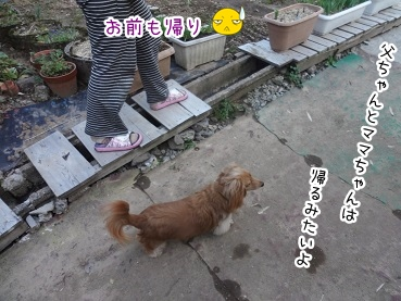 kinako2297.jpg