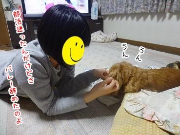 kinako2304.jpg