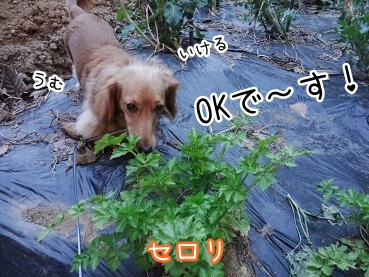 kinako2332.jpg
