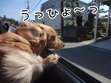 kinako2336.jpg