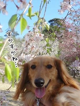 kinako2355.jpg